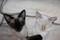 Siamese Kittens Pure Bred Registered   Beautiful !