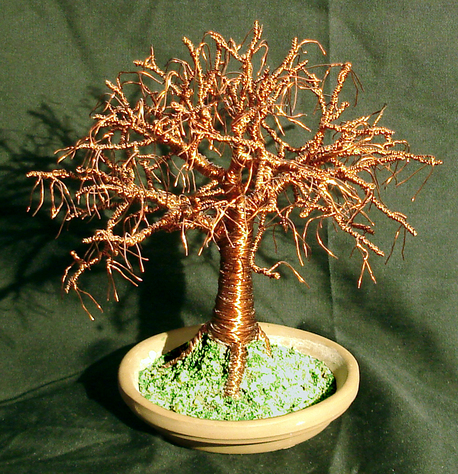 Elm on Terracotta Base