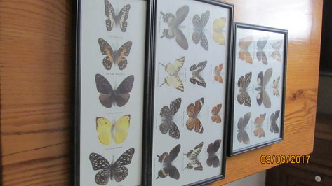 Three framed butterflies
