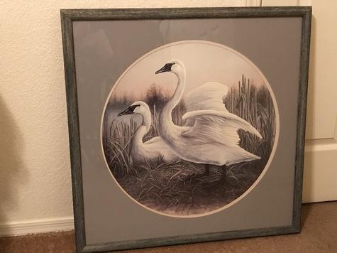 Trumpet Swan mates