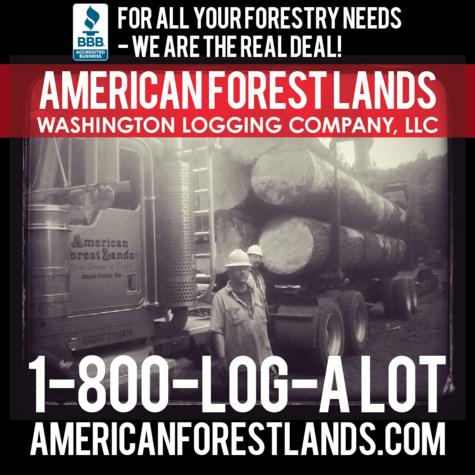 Logging tree in Chehalis Washington Logging Company Lewis County