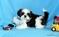 Gorgeous Shih Tzu puppies for adoption