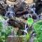 Ask These 4 Questions Before Getting A Water Feature!