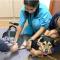 Pet Cancer, Pet Tumor, Pet Fracture treatment Singapore
