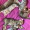 Bengal Kittens..