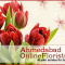 Order Flowers, Cakes and Gifts for your loved ones in Nadiad