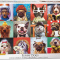 Lucia Heffernan: Funny Dogs (used 1000 PC jigsaw puzzle)